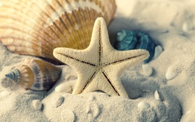 Обои песок, море, лето, ракушки, морская звезда