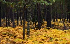 Обои осень, лес, деревья, кусты