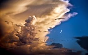 Обои облака, птицы, Небо, месяц