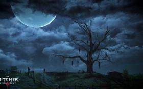 Картинка дерево, ночь, The Witcher 3: Wild Hunt, небо, луна