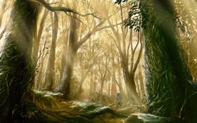 Обои лес, лучи, деревья, корни, утро, старый, путник