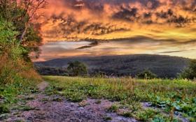 Картинка трава, природа, отдых