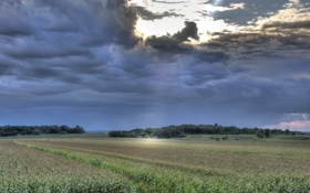 Обои закат, Поле, деревья, небо, вечер, тучи