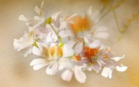 Обои фон, текстура, цветы