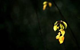 Обои ветки, темнота, листочки, молодые