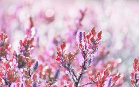 Картинка листья, цветы, боке