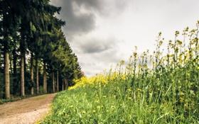 Картинка дорога, трава, природа