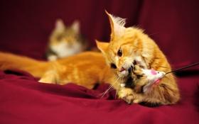 Обои кошка, настроение, игра