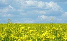Картинка природа, пейзажи, обои, поле, цветы