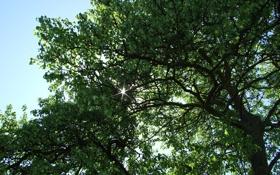 Обои листья, солнце, лучи, свет, деревья, природа, дерево
