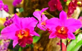 Обои природа, растение, орхидея, лепестки, макро