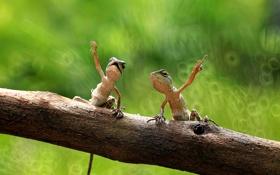 Картинка лапы, пара, бревно, сидят, ящерицы
