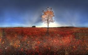 Картинка поле, свет, пейзаж, природа, дерево