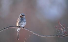 Картинка птица, ветка, хохолок
