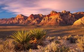 Обои закат, скалы, небо, агава, растение, кактус, пустыня