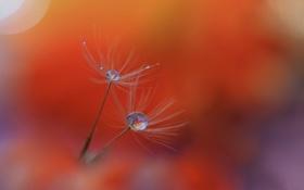Картинка капли, природа, роса, былинка