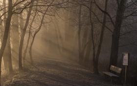 Картинка туман, парк, утро, скамья