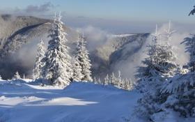 Картинка зима, лес, снег, горы, туман, ёлки