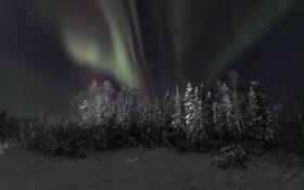 Картинка зима, небо, звезды, снег, деревья, ночь, северное сияние