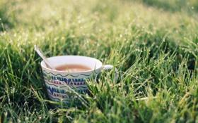 Обои трава, капли, чай, ложка, кружка