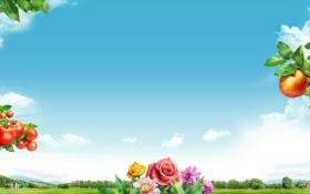 Обои небо, облака, цветы, коллаж, яблоко, розы, сад