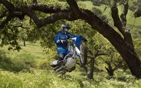 Обои дерево, прыжок, колесо, гонщик, ямаха