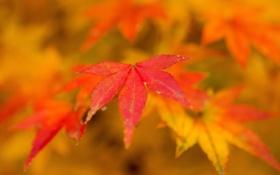 Обои природа, листья, осень