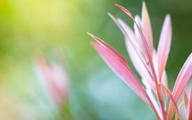 Обои трава, фото, макро обои, растения, фон, лепестки, цветы