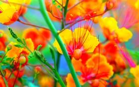Обои стебель, листья, растение, экзотика, цветы