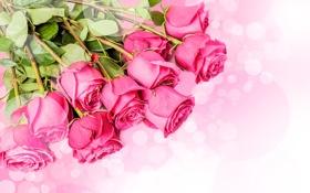 Обои Розовый, Цветы, фото, Макро, Много, Розы