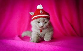 Обои фон, серый, шапочка, котенок