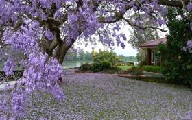 Обои цветы, дом, дерево