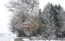 Картинка зима, иней, дорога, лес, снег, деревья