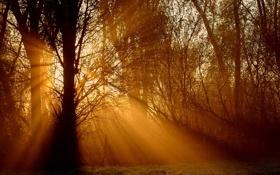 Обои трава, фото, дерево, заборы, деревья, природа, растения