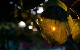 Картинка солнце, лист, Закат