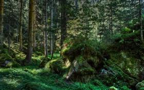 Обои green, forest, trees, wood, rocks, Moss