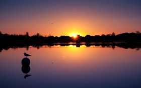 Картинка закат, озеро, птица