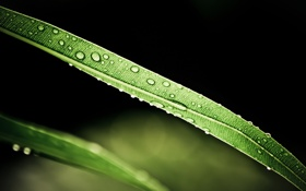 Обои зелень, капли, листок, листик