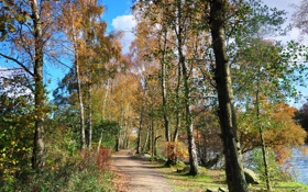 Картинка деревья, пейзаж, природа, Англия, тропа, березы