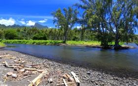 Обои горы, тропики, пальмы, побережье, Tahiti, Таити, Французская Полинезия