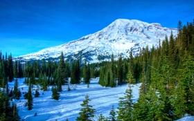 Обои вершина, лес, небо, деревья, природа, горы, снег