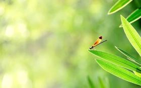 Обои зелень, листья, солнце, свет, насекомое