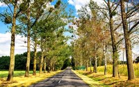 Картинка дорога, небо, солнце, облака, деревья, поля, аллея
