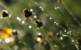 Картинка зелень, трава, вода, капли, макро, свет, брызги