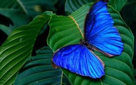 Обои листья, бабочка, butterfly