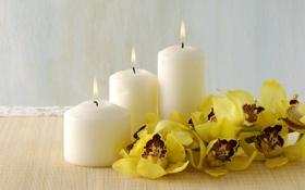 Картинка свечи, бамбук, орхидеи, Спа