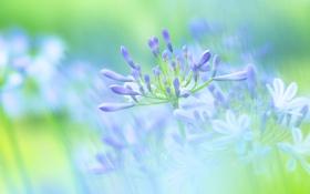Обои макро, свет, ветки, лепестки, цветы