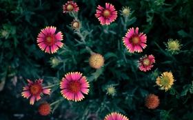 Картинка Цветок, лепестки, flower