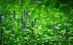 Картинка лес, цветы, поляна, растения, весна, боке