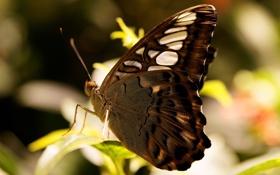 Обои Макро, Зелень, Природа, Фото, Бабочка, Листья
